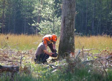 Entrepreneur/euse de travaux forestiers