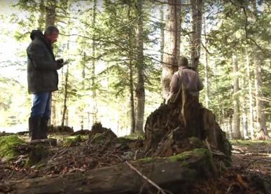 Expert/e forestier/ère